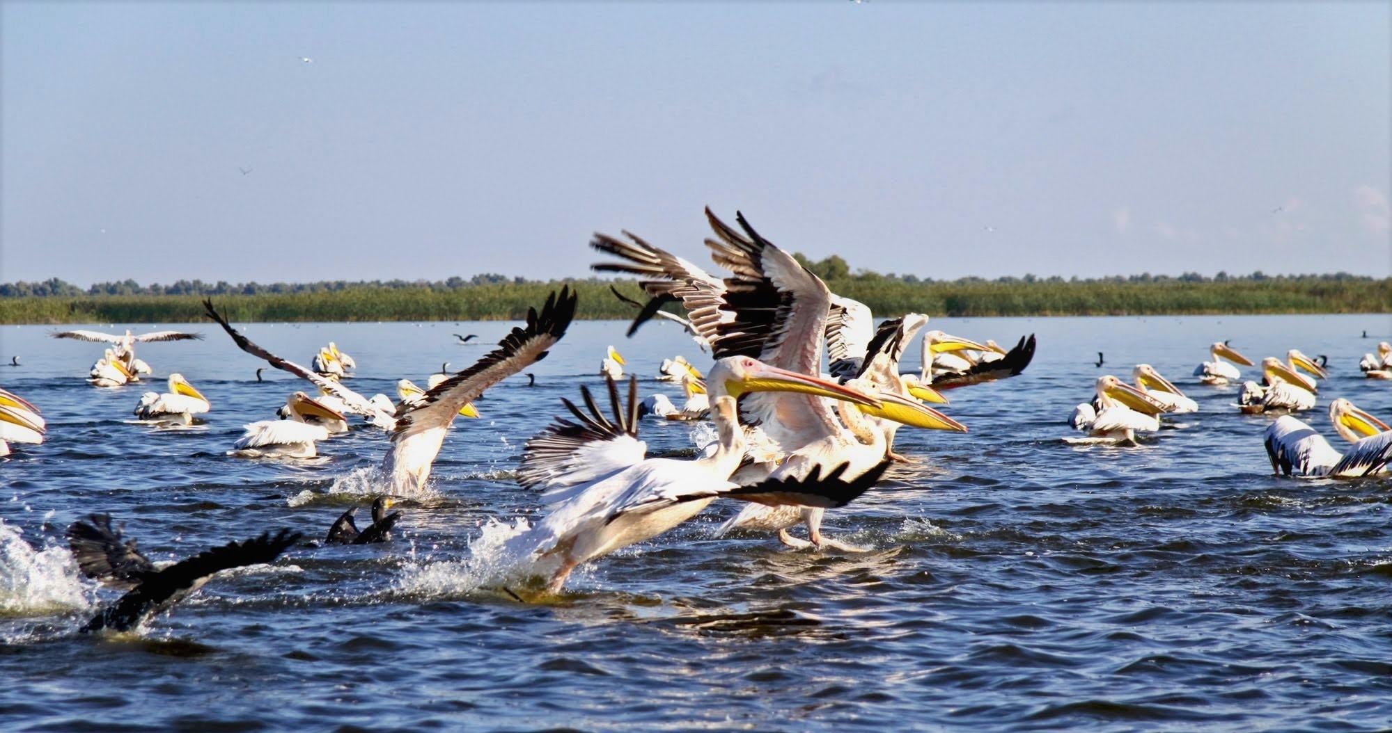 7. Danube delta